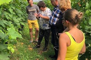 Ringkäik Veinimäe viinamarjaistandikus
