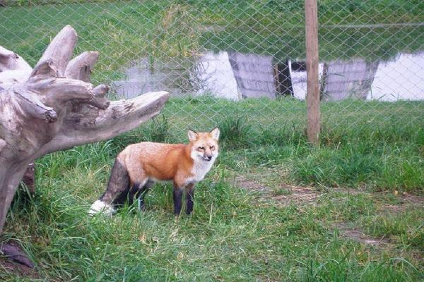 Alaveskin Eläinpuisto