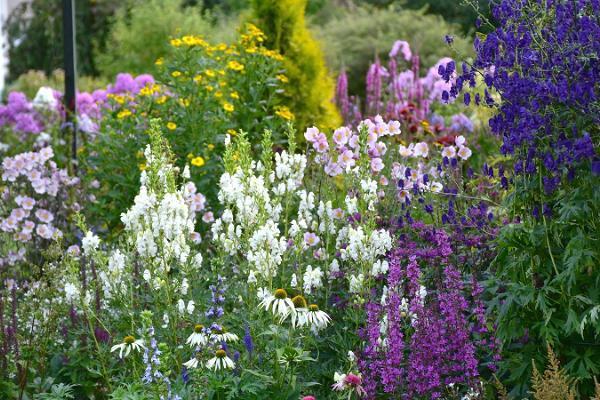 Maie Aed - a colourful home garden near Pärnu