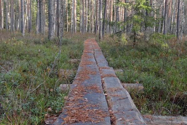 Urwaldschutzgebiet Järvselja
