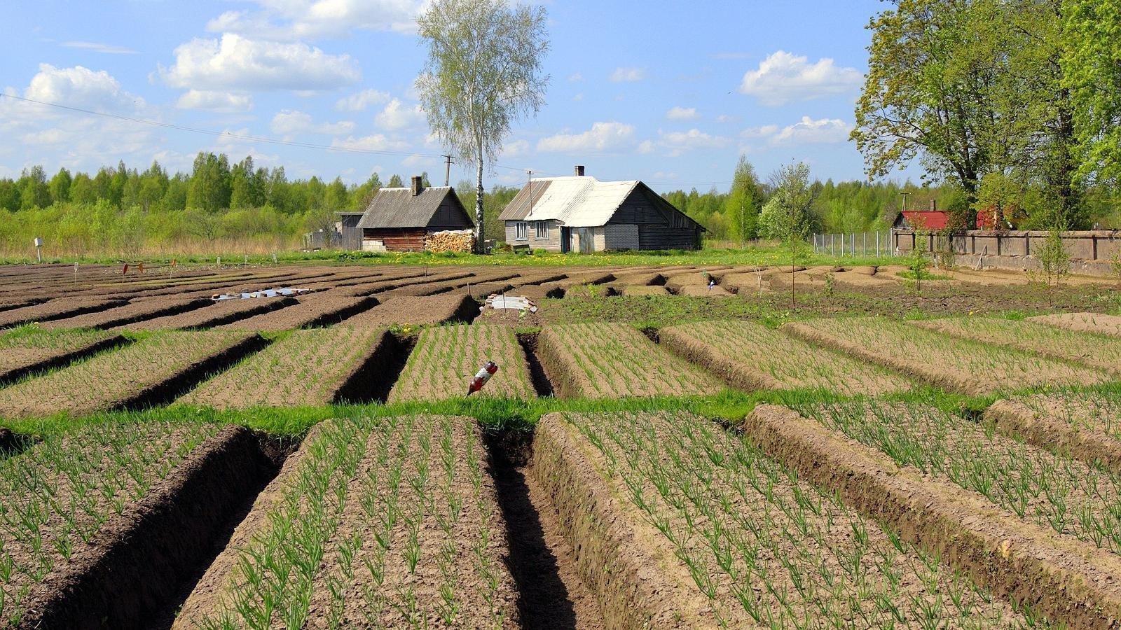 Купить хутор в эстонии как заработать в америке иностранцу