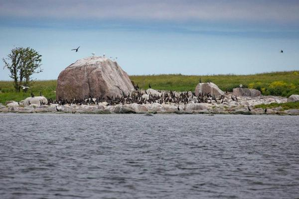 Seal-watching trips on the Malusi islands