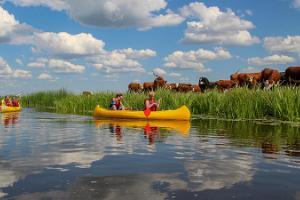 Kanot- och kajaksturer i Matsalu nationalpark