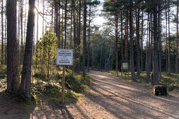 Peraküla - der sandige Wanderweg durch die Schlüsselbiotope der Küsten.