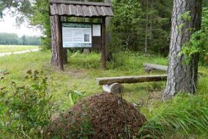 Tõrvandu skogskunskapsled