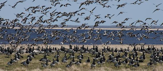 Naturkameror öppnar ett fönster mot estniskt djurliv