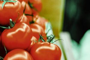 Tarton kauppahalli: kypsät tomaatit