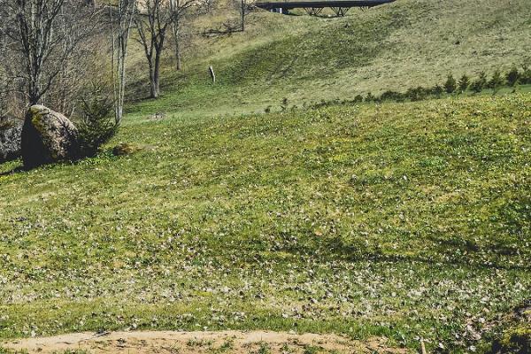 Vana-Vastselīnas muižas parks
