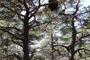 Abula-Kalasman luontopolku ja leirintäalue
