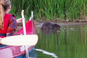 Kopravaatlusmatk kanuudel