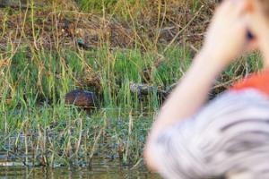 Kopravaatlusmatk kanuudel, kobras kalda ääres piilumas ja kanuutaja