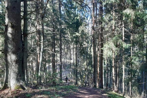 Palumägede vandringsled och eldrastplats