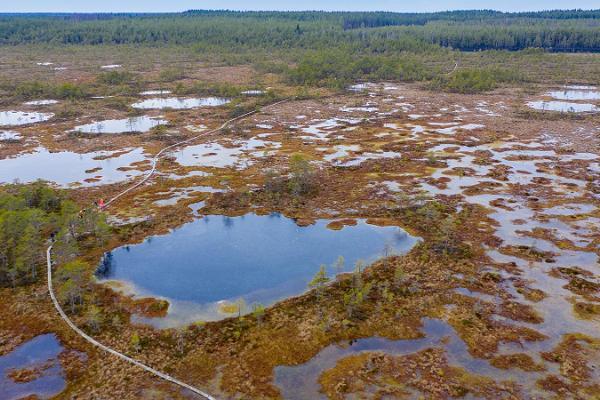 Snowshoe trip in Kõnnu Suursoo bog 'In the footsteps of the ice age'