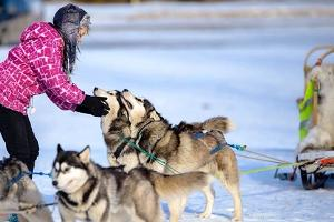 Neumann Husky dog-sled rides