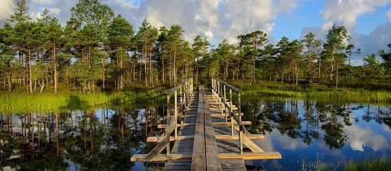 visit estonia, nature, hiking, hiking trails