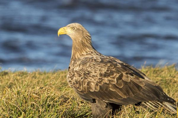 Birdwatching in Luitemaa
