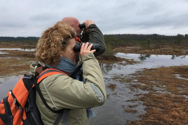 Bootsfahrt im Nationalpark Matsalu – wir beobachten Biber, Elche und Vögel