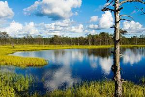 Giidiga päevareis Lahemaa Rahvusparki