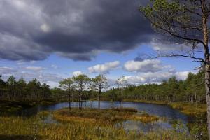 Hiking trail in the Meenikunno bog