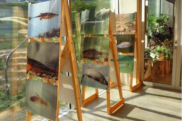 Tartu loodusmaja näitused