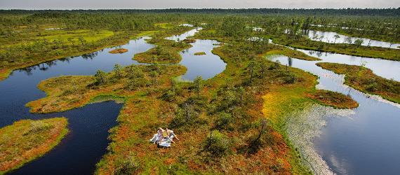 Estonian mires, bogs, wetlands, Visit Estonia