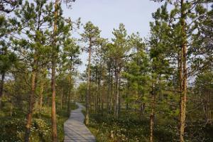 Valgesoo study trail