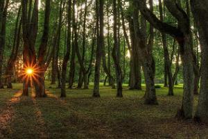 Поместье и усадебный парк Луке