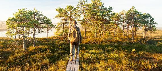 Bog in Estonia