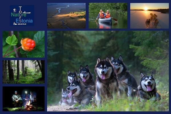 Nature Tours in Estonia marja- ja sieniretket Peipsiveeren luonnonsuojelualueella