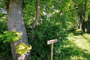 Anijas muižas parka slēpto burvību iepazīšana gida pavadībā