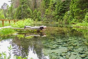 Природный тур: из Таллинна в Тарту через леса Кырвемаа