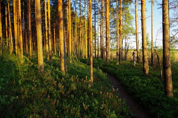 Экскурсия на природе: из Таллинна в Тарту через леса Кырвемаа
