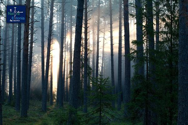 Nature Tours Estonia avastusretk Peipsiveere looduskaitseala rabasaartele