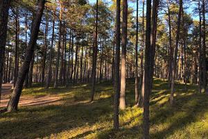 Нываский заповедник, Нываская зона отдыха и Нываский посетительский центр Центра управления государственными лесами