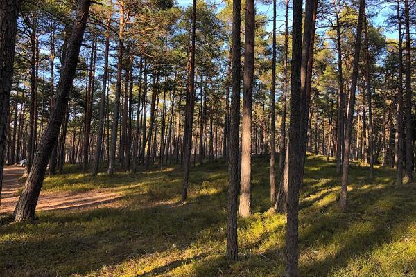 Nevas ainavu aizsardzības zona, RMK Nevas atpūtas vieta un apmeklētāju centrs