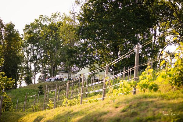 Выращивание винограда в Эстонии и мастер-классы на плантации