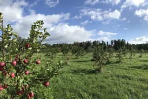 Piesta Kuusikaru talu õunatoodete talu külastus