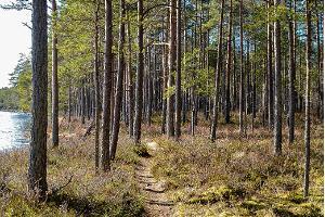 Wanderwege am Kirikumäe-See