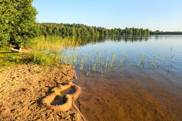 Uljaste järve liivane rannariba