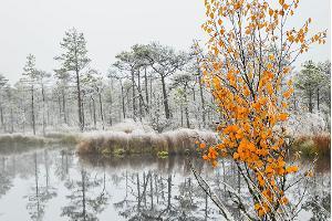 Luhasoo nature studies trail