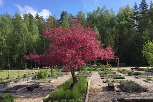 Tammes saimniecības zālīšu dārzs