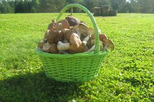 Поход за грибами в Кырвемаа