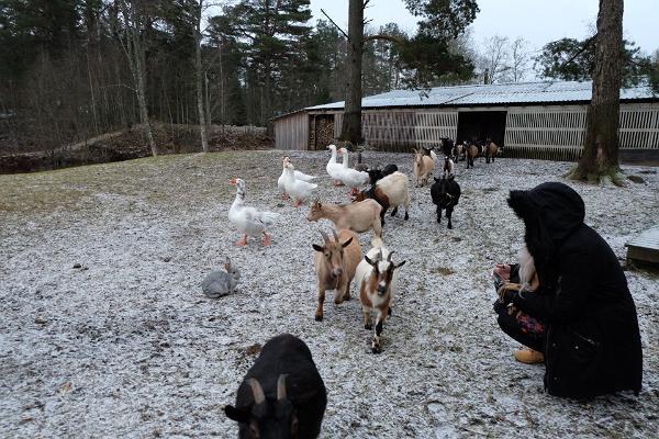Kallaste Farm animal park