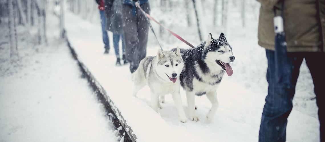 sled dogs in Estonia, visit Estonia