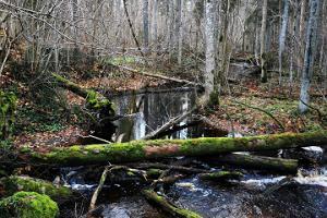 Lehrpfad Bruchwald Laiksaare des Forstamtes RMK