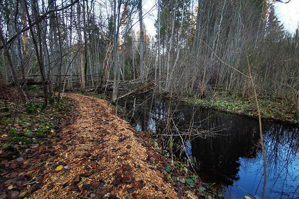 RMK Laiksaare flodslättskogsled