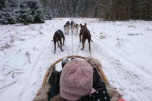 Hundegespannfahrten mit Schlittenhunden von Mutimuudi