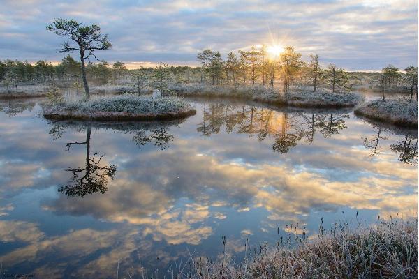 Loodus Alam-Pedja looduskaitsealal