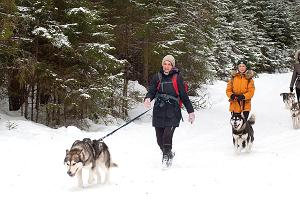 Hiking with sled dogs