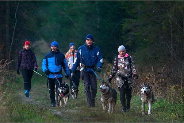 Пешие походы с ездовыми собаками